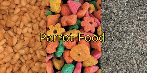 Các loại thực phẩm tốt và không tốt cho vẹt