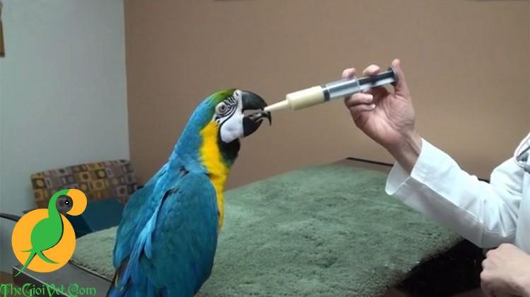 Cách cho vẹt non ăn