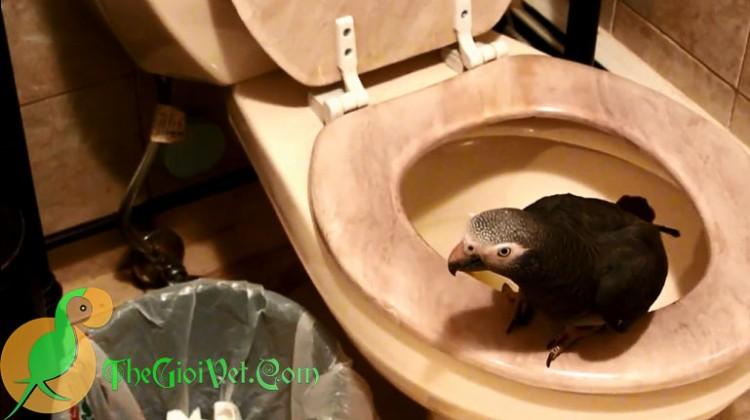 Huấn luyện vẹt đi vệ sinh đúng chỗ