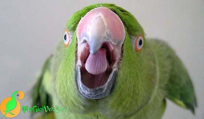 Làm thế nào để vẹt bớt la hét và gây ồn ào
