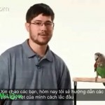 [Video] Cách dạy vẹt lắc đầu