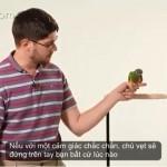 [Video] Cách làm vẹt đứng trên tay người