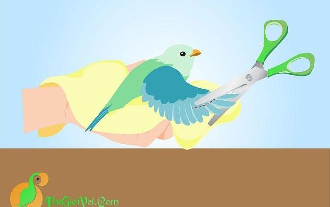 Làm thế nào để cắt cánh chim nhỏ