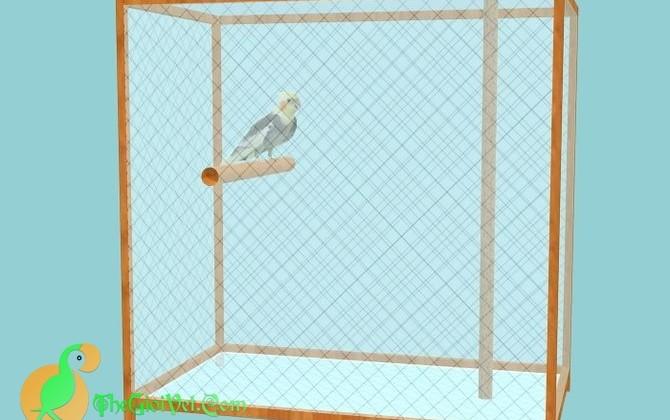 Giữ sức khỏe cho loài vẹt Cockatiel có khó lắm không?