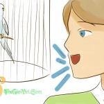 Làm thế nào để thân thiện với loài vẹt Budgie
