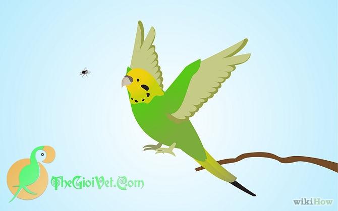 Cách dạy Budgie bắt ruồi