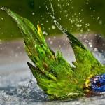 Hướng Dẫn Cách Tắm Cho Vẹt Từ A – Z